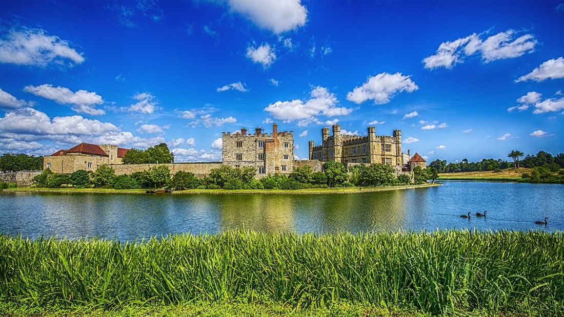 Chris Thaxter | Leeds Castle and Black Swans
