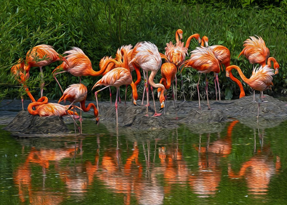 Chris Thaxter | Flamingo Reflection