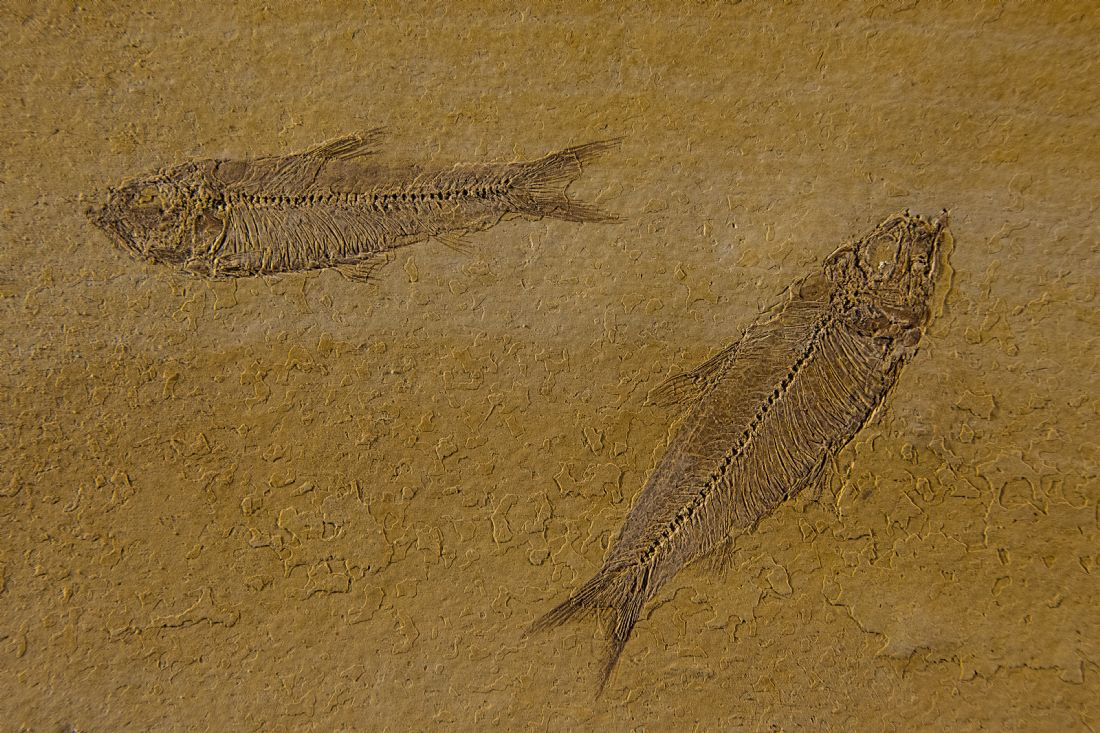 Chris Thaxter | Fish Fossils