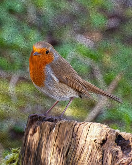 Chris Thaxter | Robin Redbreast