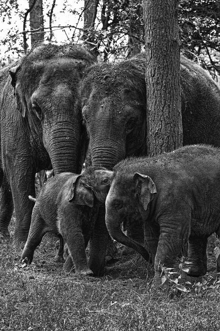 Chris Thaxter | Elephant Family
