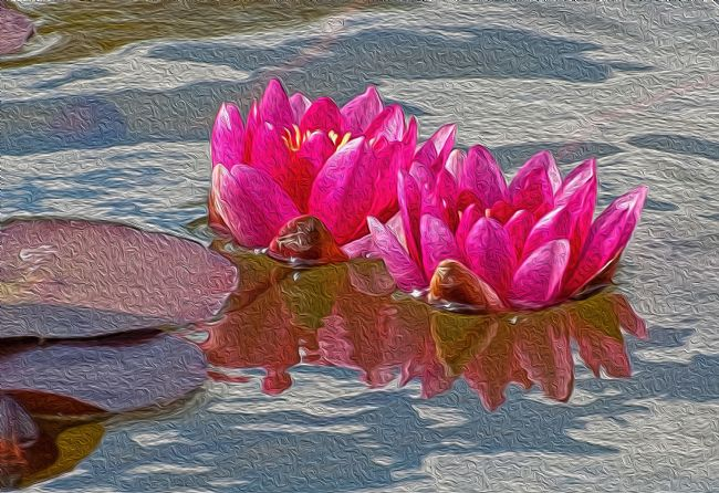 Chris Thaxter | Pink Water Lillies
