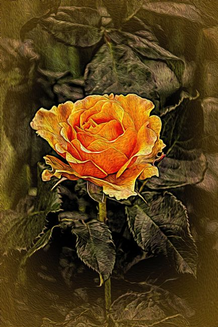 Chris Thaxter | Orange Rose in oils