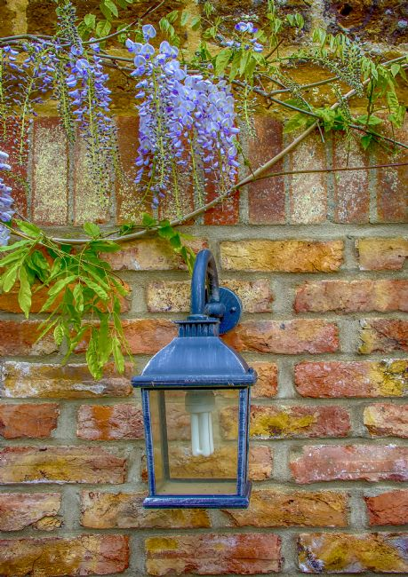 Chris Thaxter | Wisteria and Lamp