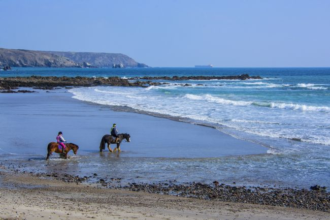 Chris Thaxter | Horses on Beach at Kennack 2