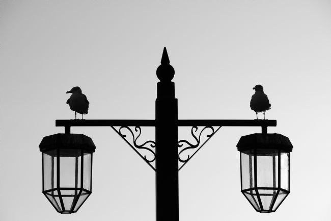 Chris Day | Silhouette of Two Gulls on a Lamp post