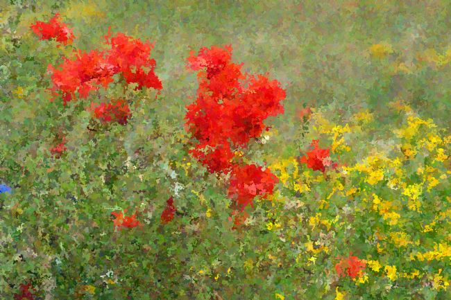 Chris Day | Impressionist Poppies