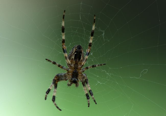 Chris Day | Orb Web Spider