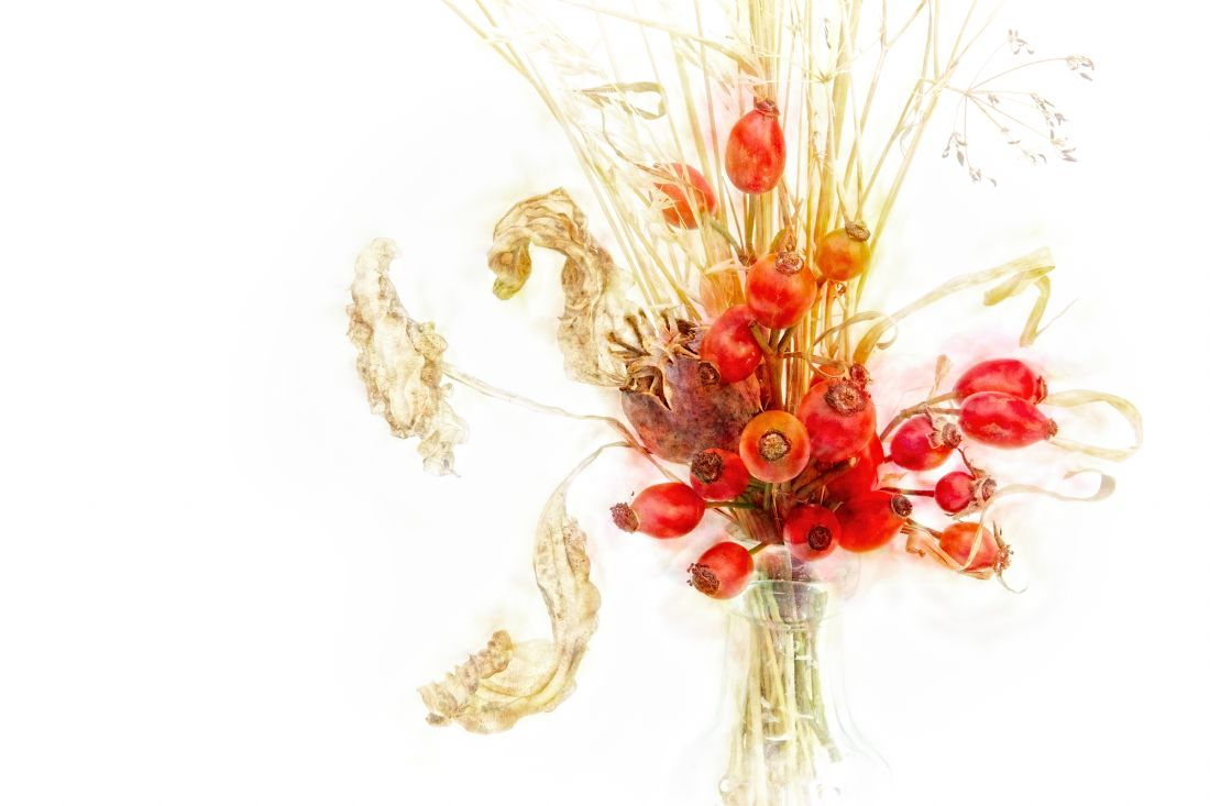 Ann Garrett | Berries and Grasses