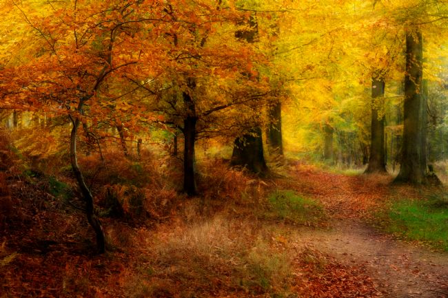 Ann Garrett | Autumn Colours