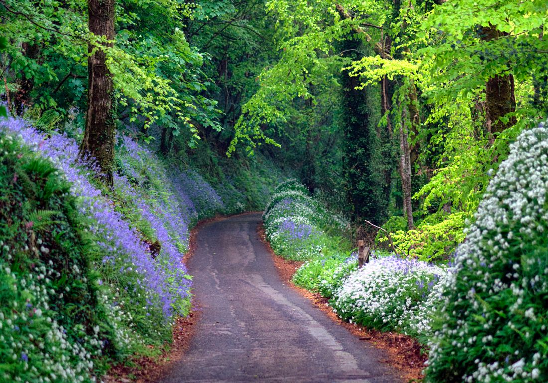 Rosie Spooner | Driving through the magical bluebell woods near Looe