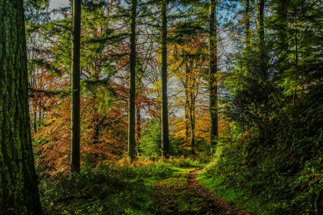 Frank Etchells | Autumnal Walk Through Beaumont's Woods