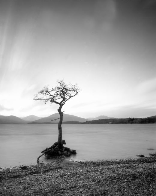 Karl Thompson | Lone Tree