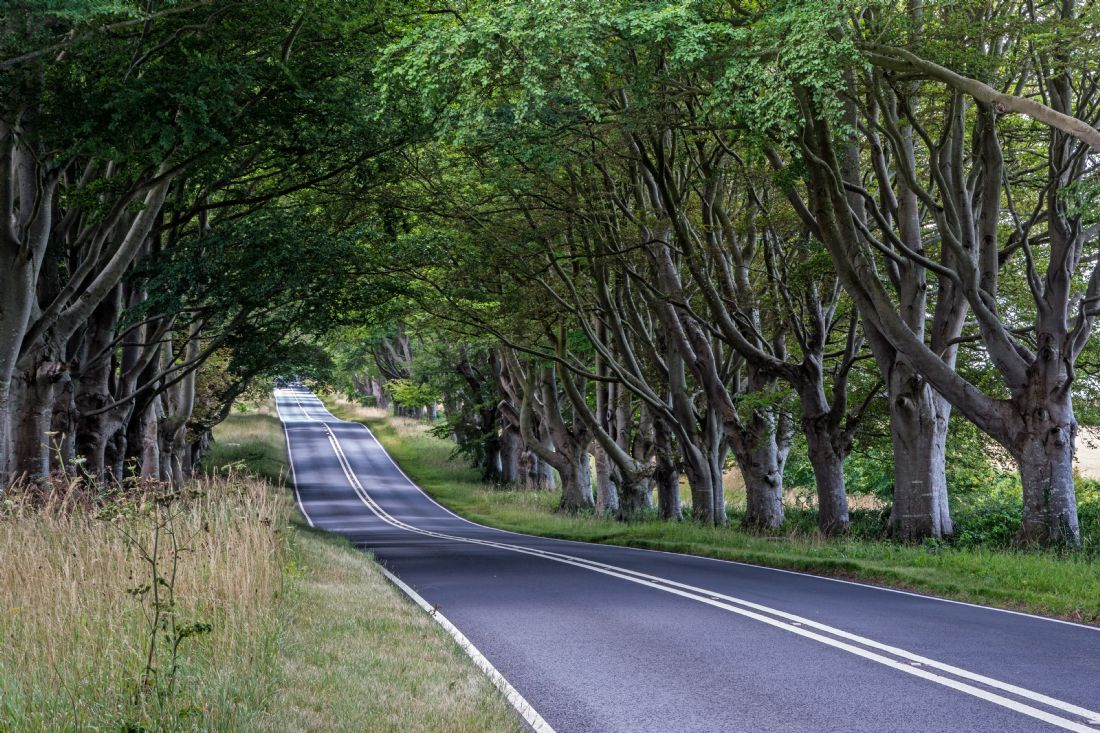 Phil Wareham | Beech Avenue