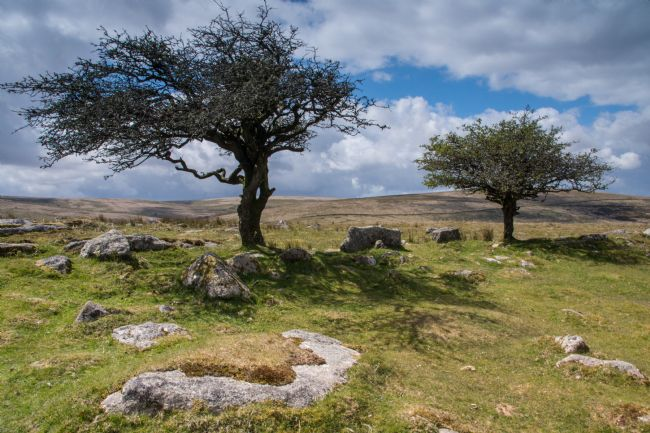 Phil Wareham | Dartmoor