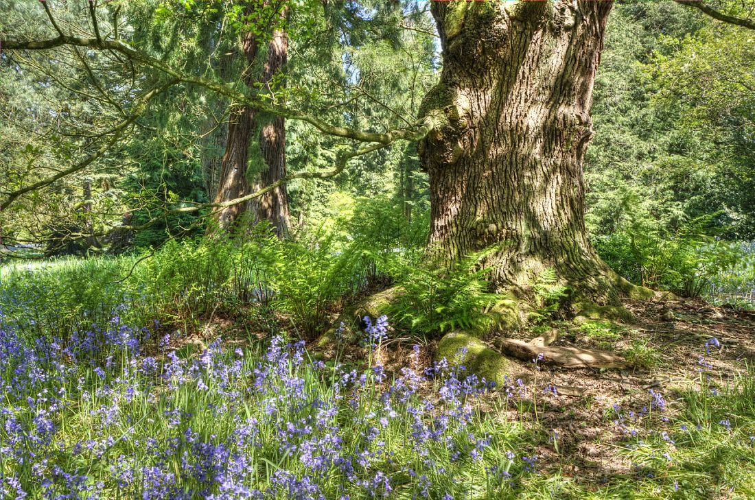 Pam Sargeant | Bluebell Woods