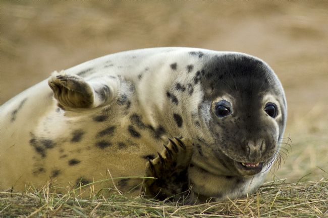 Pam Sargeant | Seal Pup