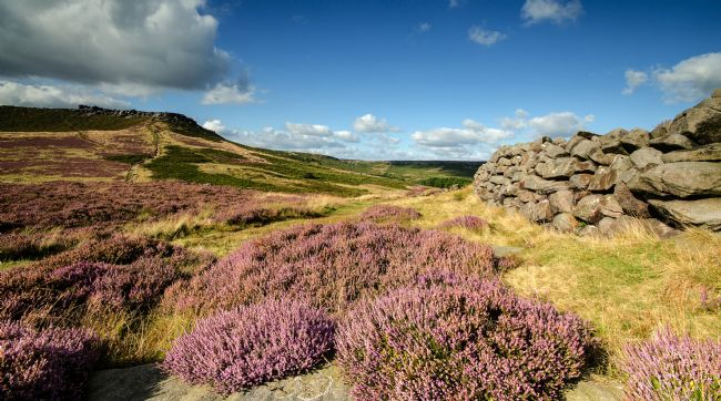 Pam Sargeant | Peak District Heather