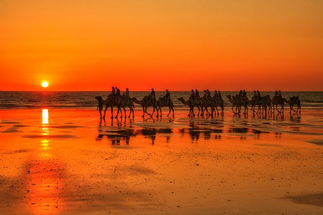 Pauline  Tims | Camels on Cable Beach, Broome, Western Australia