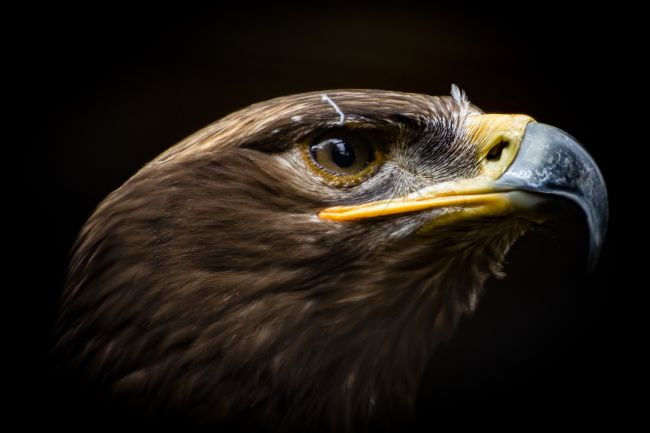 Niels Richards | Eagle