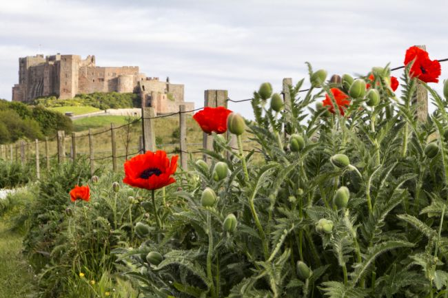 Daniel Dent | Bamburgh Castle and Poppies