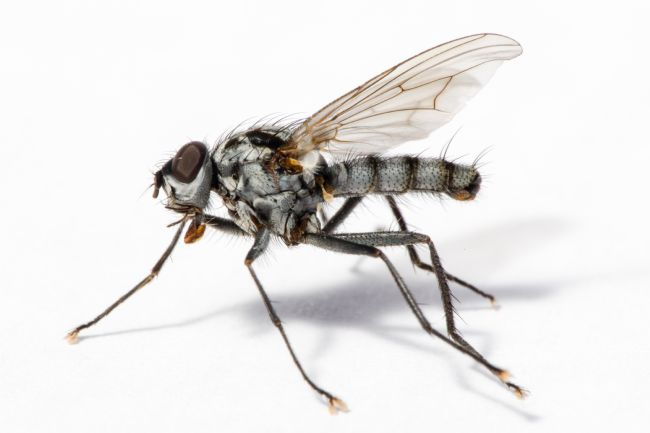 Tim Hage | Robber Fly