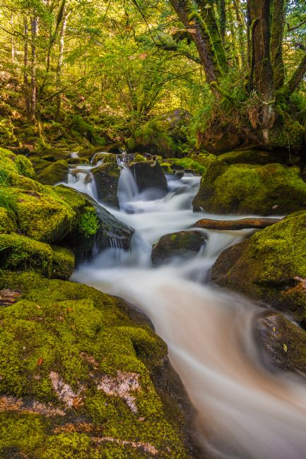 Tracey Yeo | Golitha falls