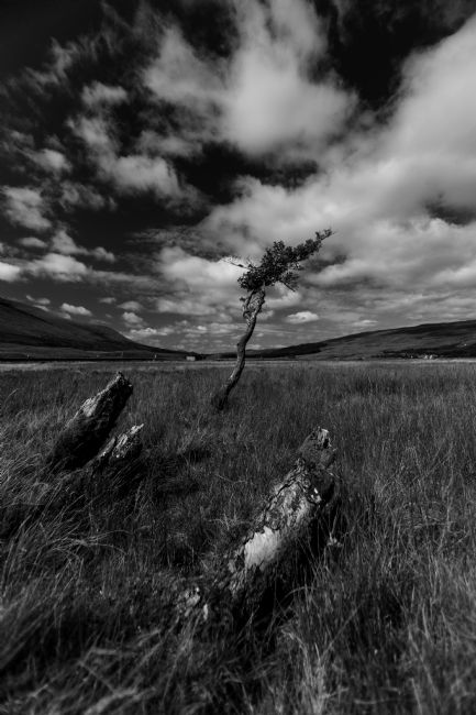 David Richardson | Single Tree at Loch Tulla Black and White