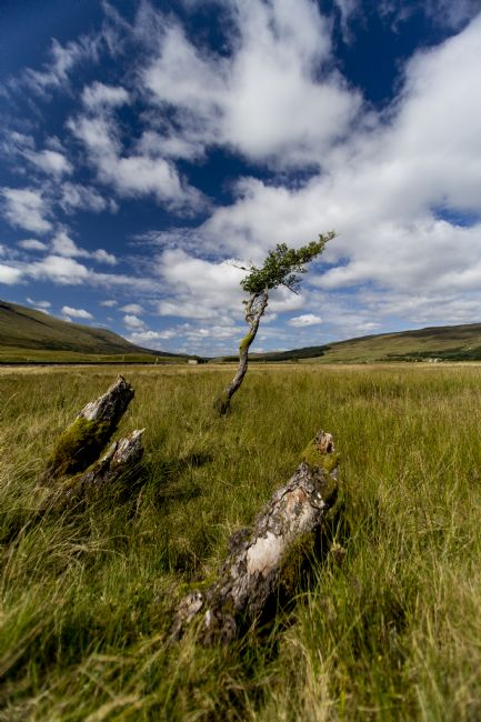David Richardson | Single Tree at Loch Tulla