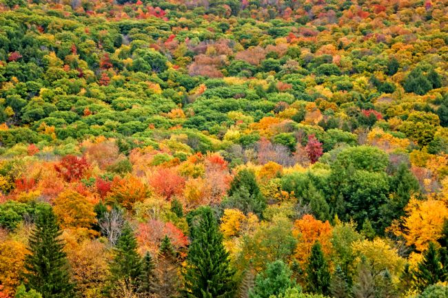 David Birchall | A carpet of autumn colour in Vermont