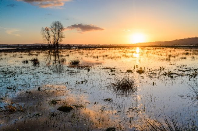 Bob Small | A flooded King's Sedge Moor on the Somerset Levels