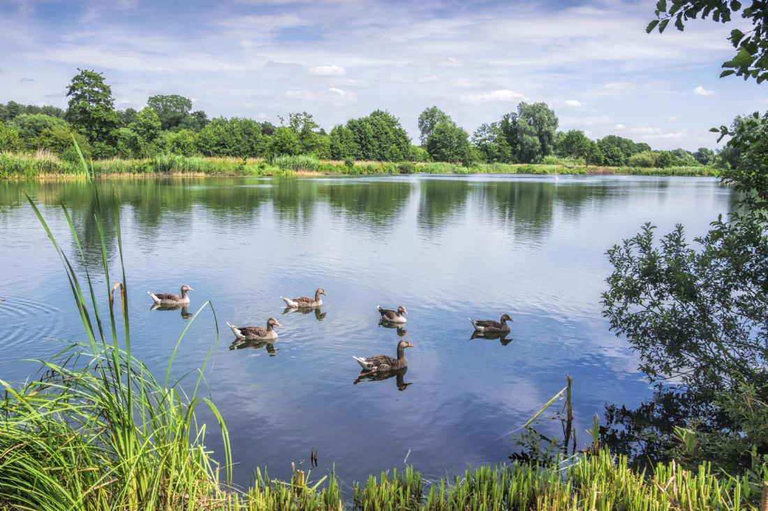 Hugh Gillings | Lackford Lakes