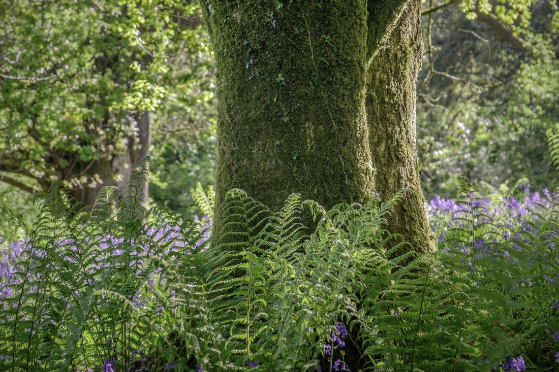 Hugh Gillings | Tree and Ferns