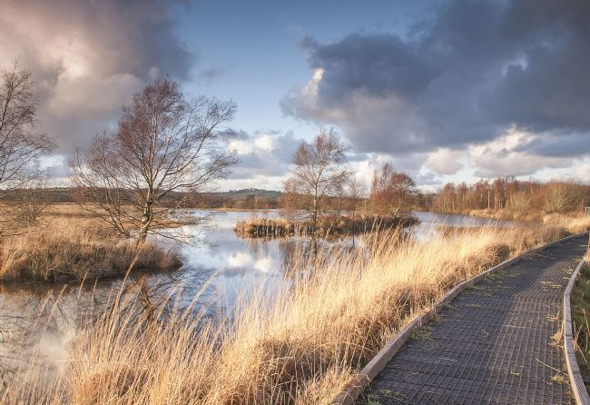 Hugh Gillings | Cors Caron Nature Reserve