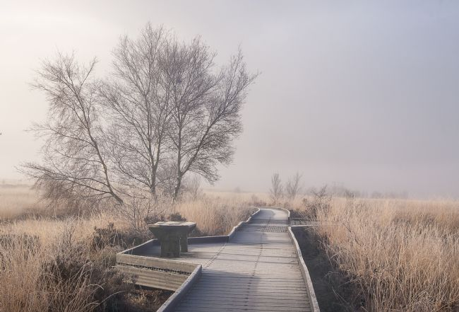 Hugh Gillings | Cors Caron boardwalk