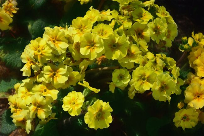 Kaye Menner | Yellow Spring Flowers