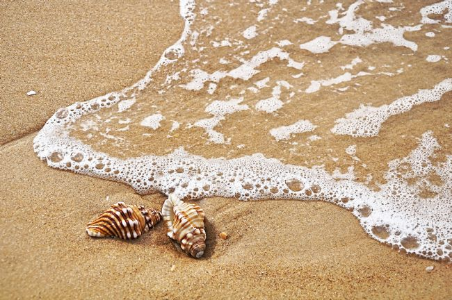 Kaye Menner | Seashells and Lace