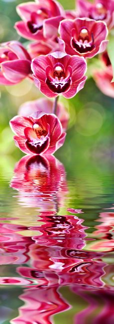 Kaye Menner | Cascading Orchids Reflecting