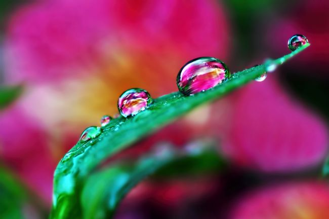 Kaye Menner | Water Droplets in Magenta