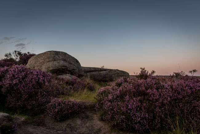 Jeni Harney | Purple Heather and Rocks