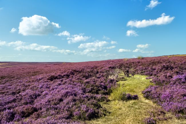 David Hollingworth | A North Yorkshire Moors Vista