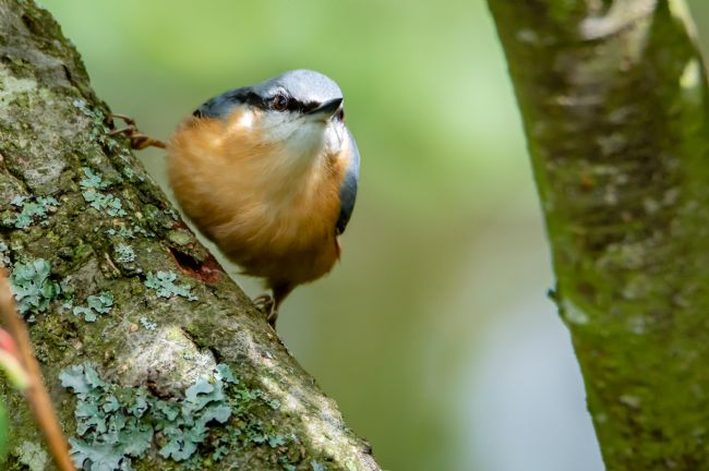 Mike Cave | Nuthatch