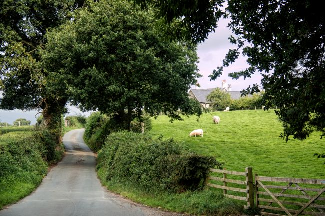 Susan Tinsley | Welsh rural lane