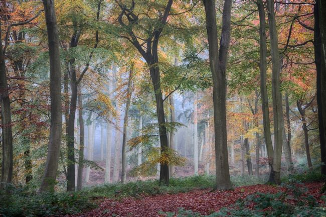 Ceri Jones | Autumn Woodlands