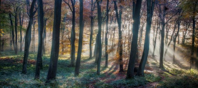 Ceri Jones | Woodland Sunrise