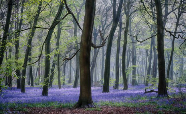 Ceri Jones | Spring Bluebell Woodlands
