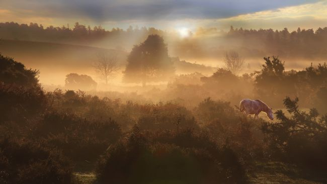 Ceri Jones | New Forest Dawn