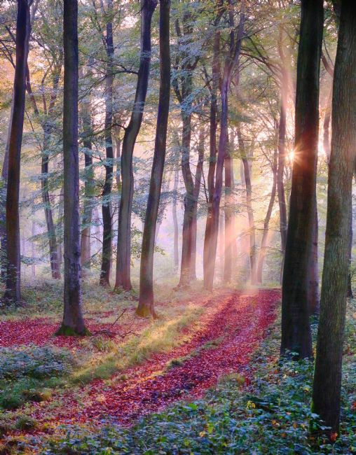 Ceri Jones | October morning Woodlands
