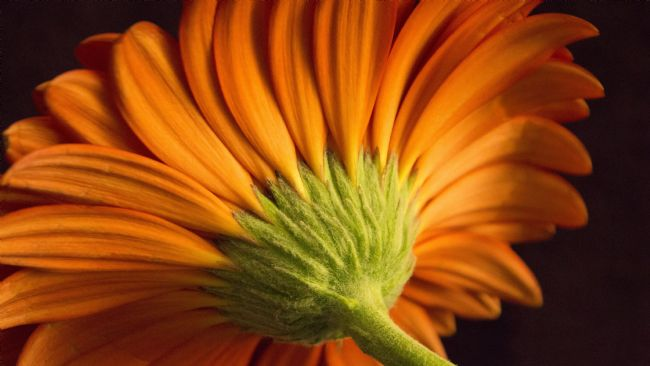 Heather Stratton | The Orange Daisy