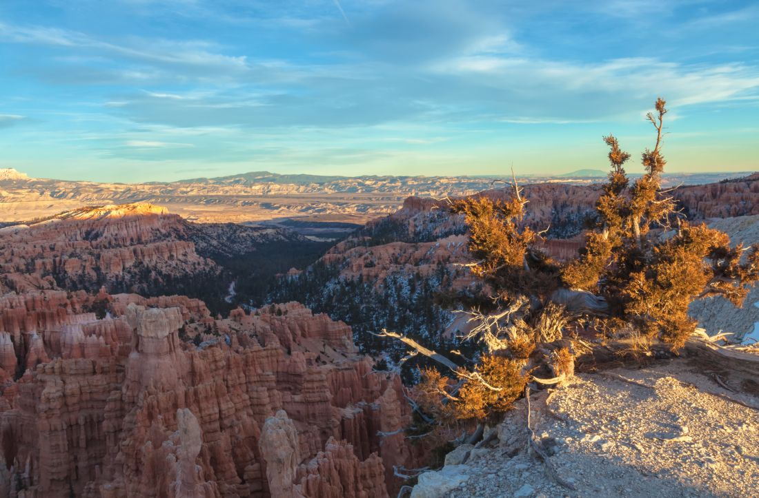 jonathan nguyen | bryce and tree